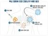 식약처, 국내 개발 코로나19 백신(1․2상) 임상 계획 승인